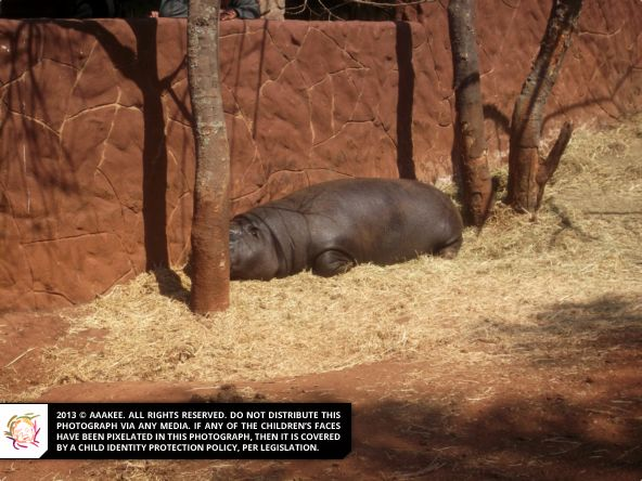 - Day Trip to the Rhino & Lion Nature Reserve (Catherine Robson Children's Home)